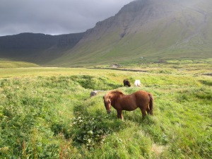 Faroe Pony, Faroe Islands